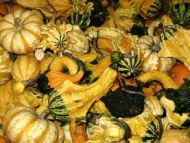 OV Gourds Mixed