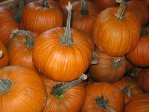 Sugar Pie - classic pumpkin pie