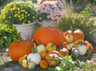 Fall Decorating Package